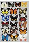 Amaonm 19 Pcs Removable Diy Pvc 3d Colorful Butterfly Wall S