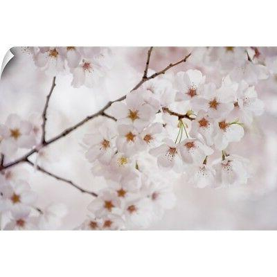 Wall Decal entitled Japanese cherry blossom