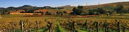 "ArtsyCanvas Napa Valley Vineyard 60"" x 15"" Fabric Wall Stick"